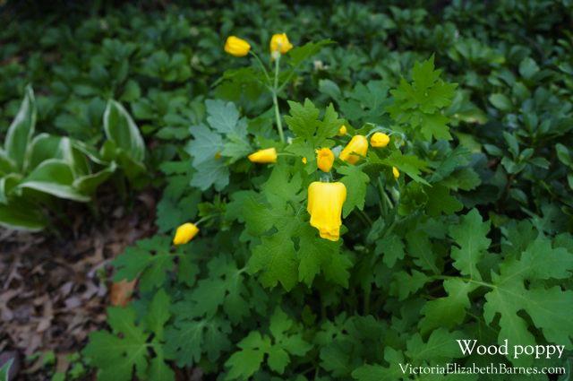 8 Best Shade Loving Plants Flowering Shade Perennials