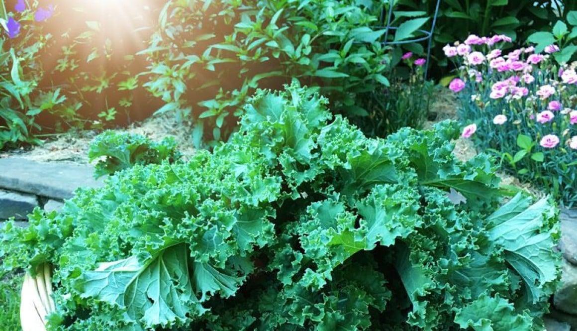 freezing raw kale1