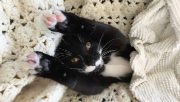 bonded foster kittens fb