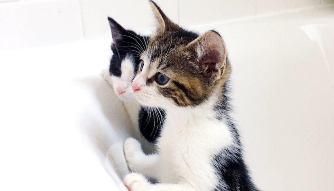 foster kittens October 2017 6