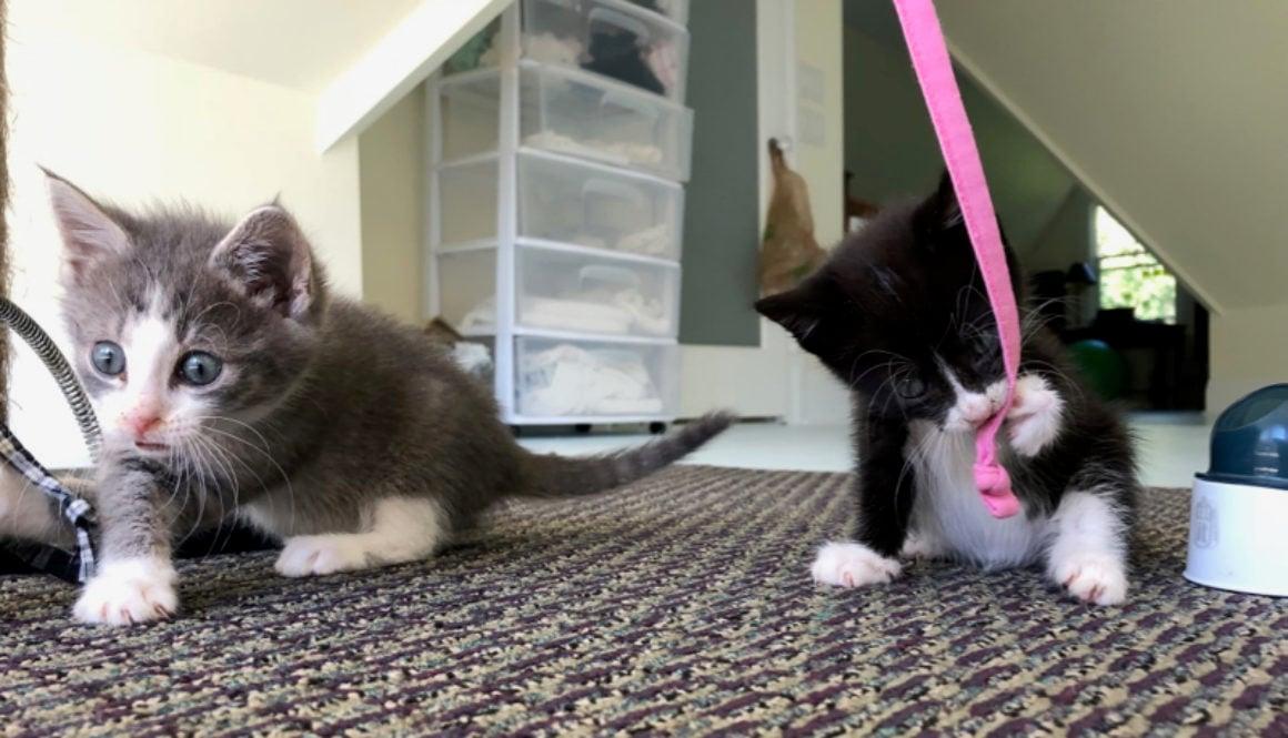 october kittens cover - 1