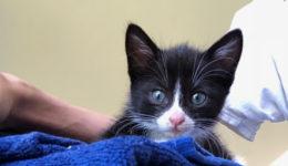 foster kittens november - 1 (21)