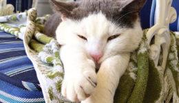 mister cat 5