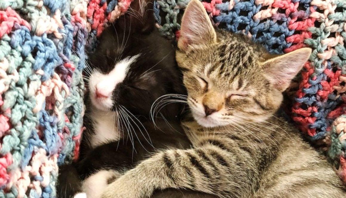 foster kittens july 2019